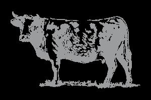 ingredienti-mucca